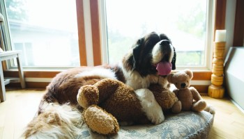 6 Ways to help your dog maintain calm behavior