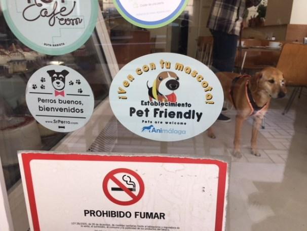 perros bienvenidos