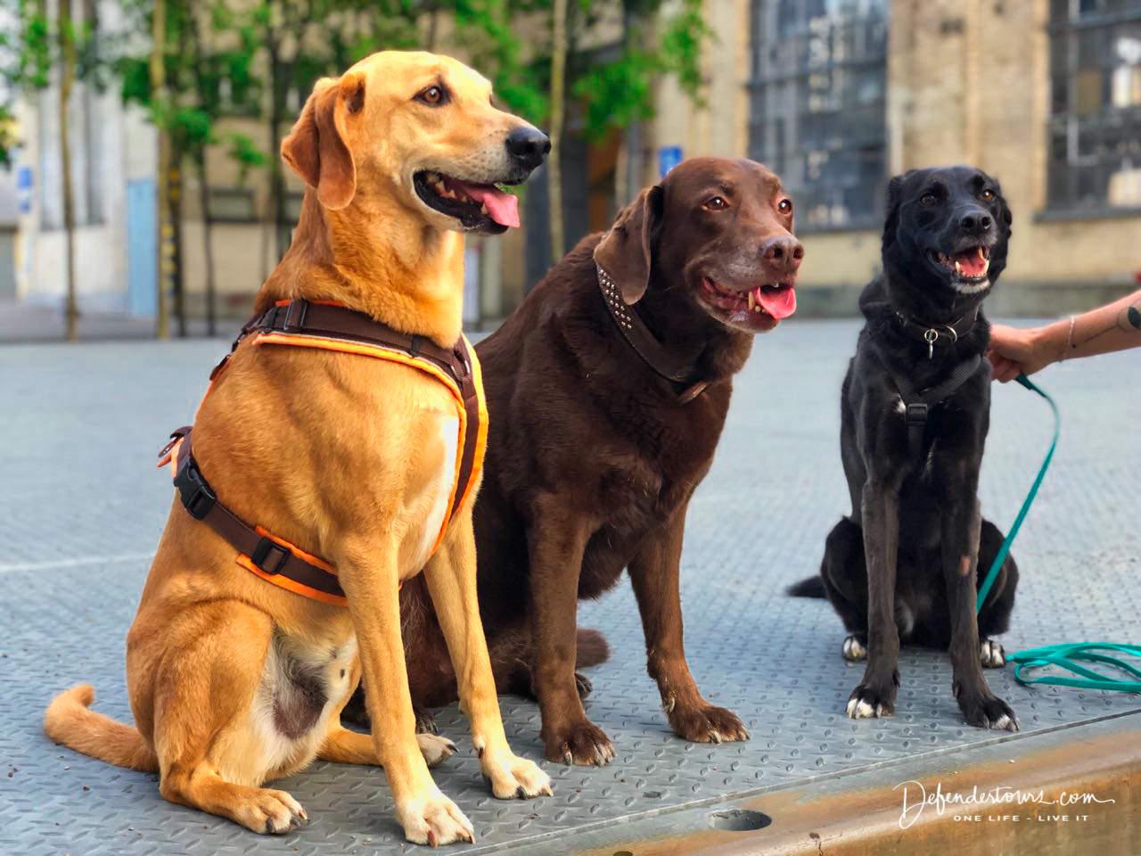 Joiz, Ruby & Yuri
