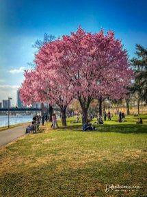 Springtime in Frankfurt