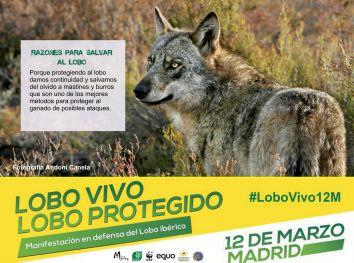 05-Sticker-LoboVivo