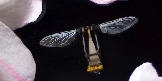 An early prototype of the RoboBee built by Robert J. Wood's team at Harvard. Photo: SEAS
