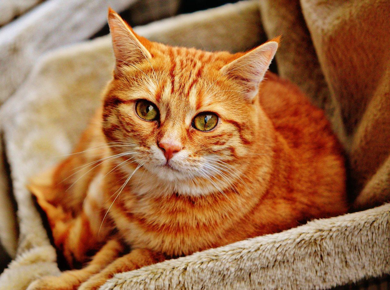 gato amarelo em escada