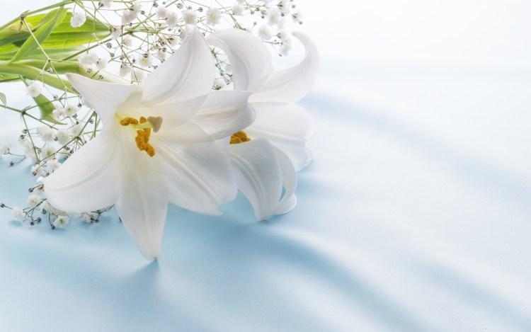 台風 21 号のお見舞いの花