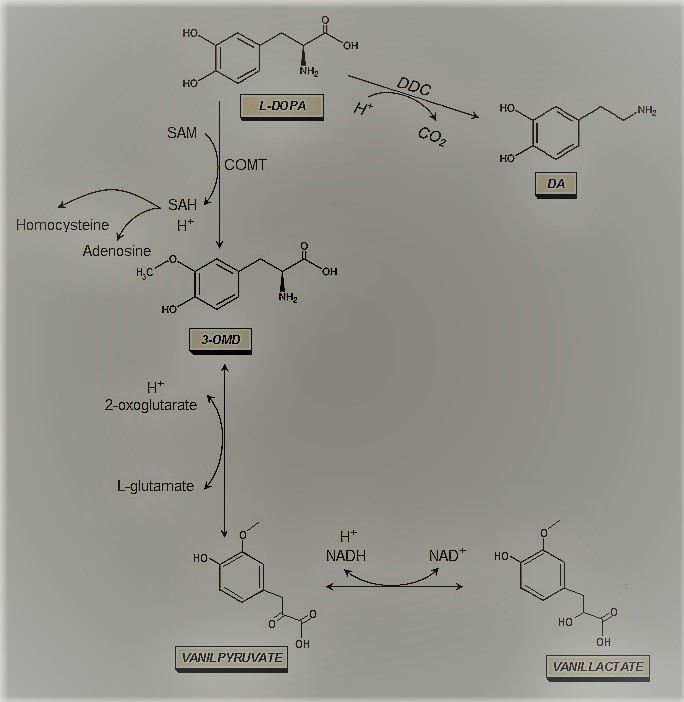 What is metabolism? and What is metabolism pathway?