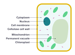 Plant Cells and Animal Cells-Differences and Comparisons, and Diagram