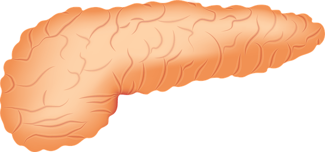 What is Pancreas? Structure, What are the function of the pancreas?
