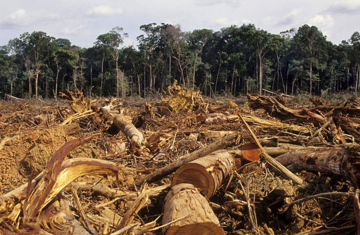 Deforestation In Cameroon
