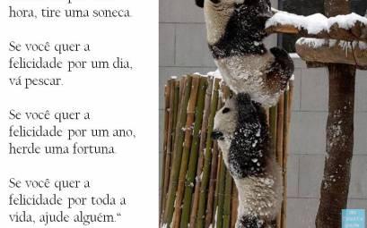 a felicidade, frase do dia - #assopraquesara - provérbio chinês