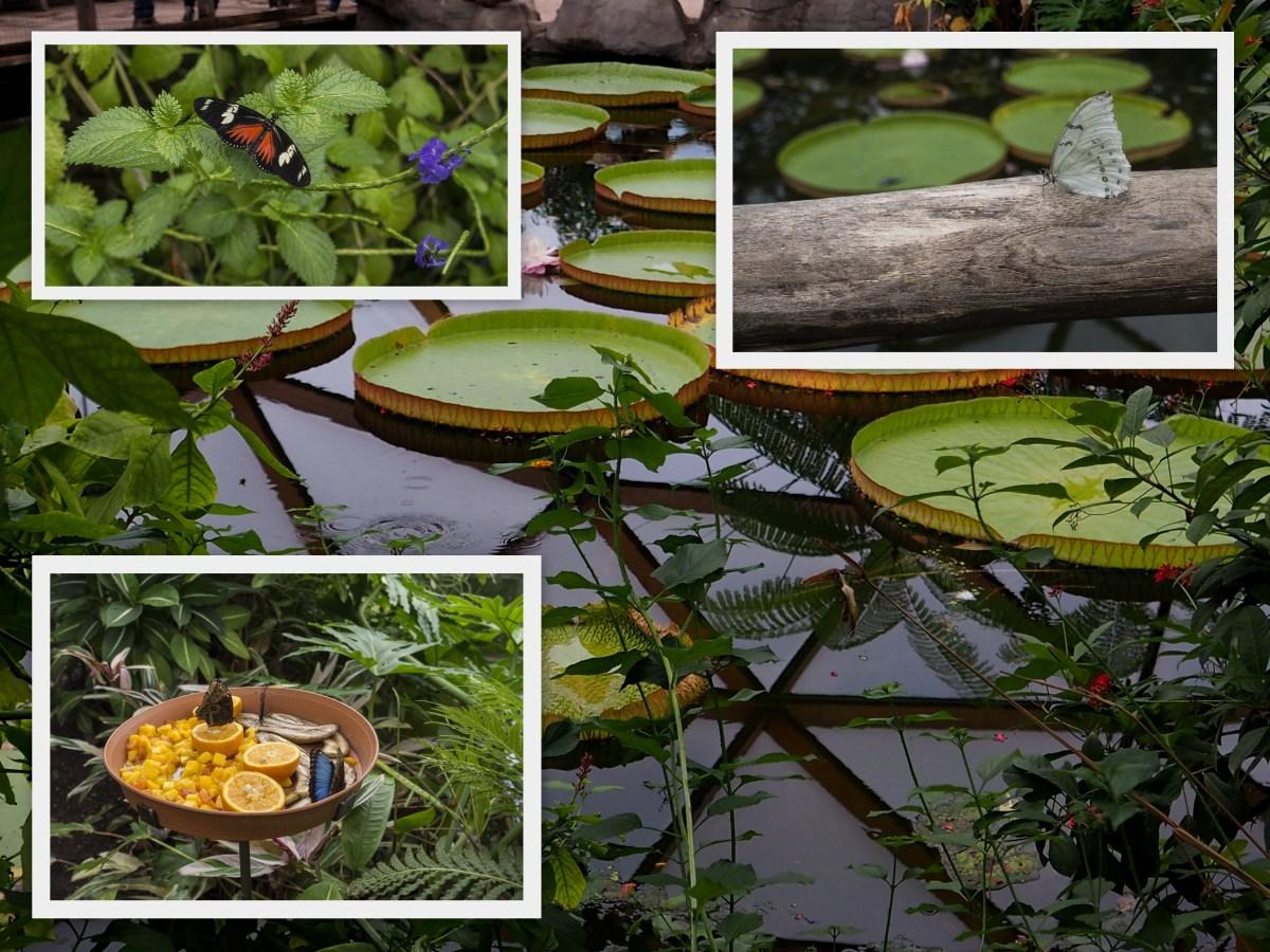 foto-1-1-collage
