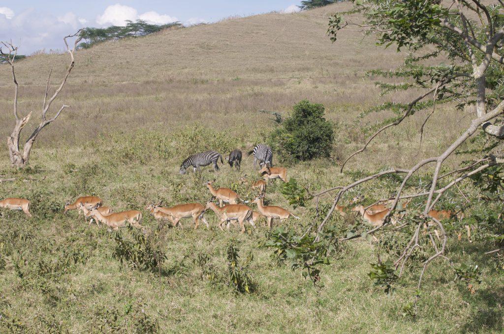 safari groeiblog