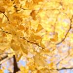 季節の変わり目に・・・の挨拶と 、ノセボ効果