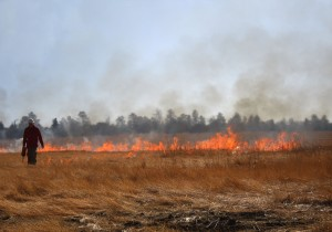 Firefighter_uses_a_drip_torch_during_prescribed_burn_(3910664436)