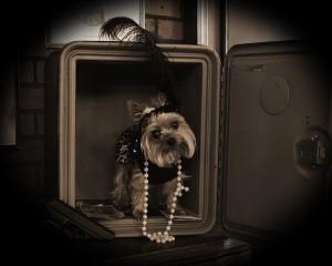 """Portrait of a Pet"" by Nikki Hodge"
