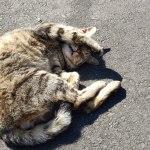 福岡にある猫島・相島へ日帰りで行ってみた