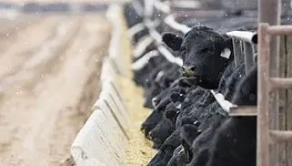 Peterson Discusses Concentrated Animal Feeding Operations, CAFOs, in South Dakota Podcast