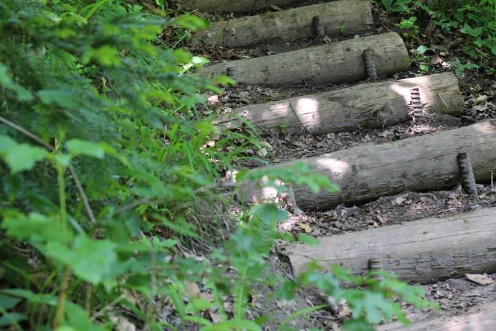 Holzstiegen erlaufschlucht (11)