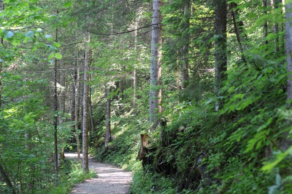Lunz am See Waldweg
