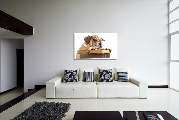 DB_1700_Englische_Bulldogge_Couch 4