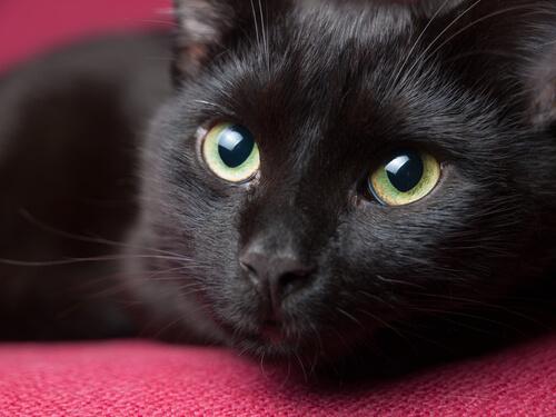 Der Aberglaube, dass schwarze Katzen Unglück bringen