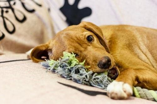 3 Tipps Damit Dein Hund In Deiner Abwesenheit Nicht Das