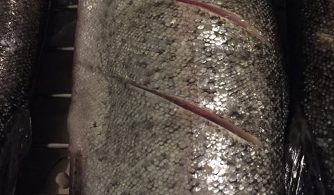 Forelle einschneiden