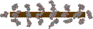 Atomic-detailed model of lignocellulose of softwoods. Based on experimental data on the structure of cellulose (brown) and lignin (cyan and red).