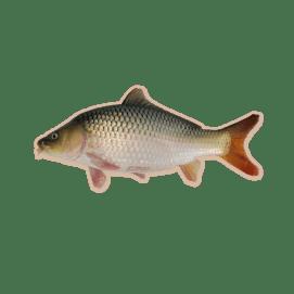 Ikan-Mas-Jantan-1024x1024