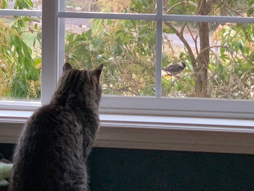 Cat watching bird