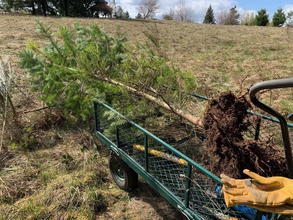 Tree in cart