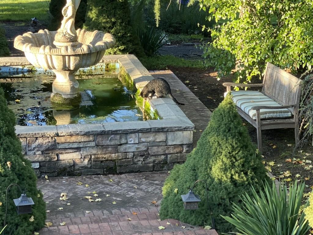 Cat fishing in fountain