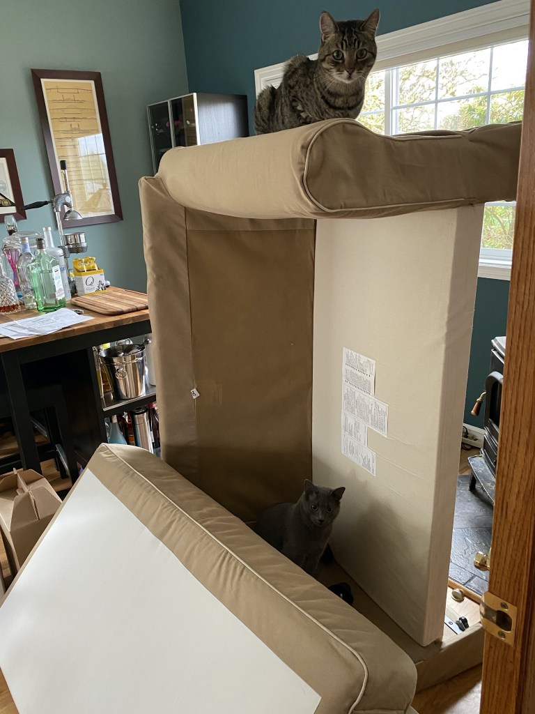 Both cats helping remove the old couch