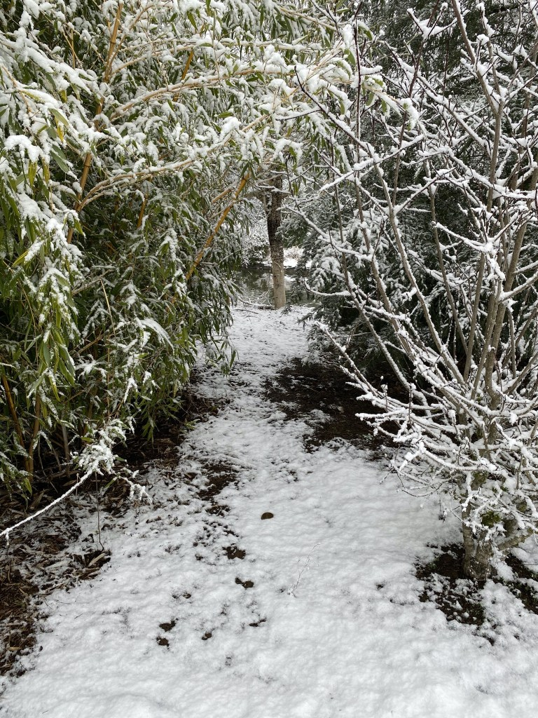 Secret path with snow