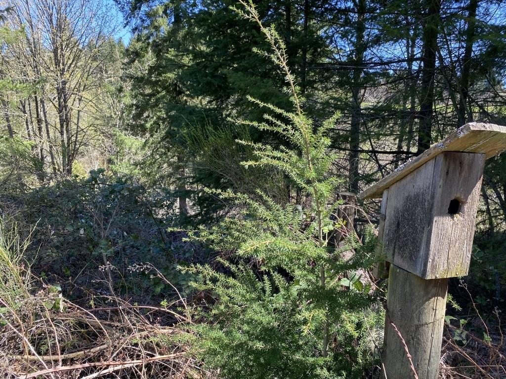 Bird feeder and trees