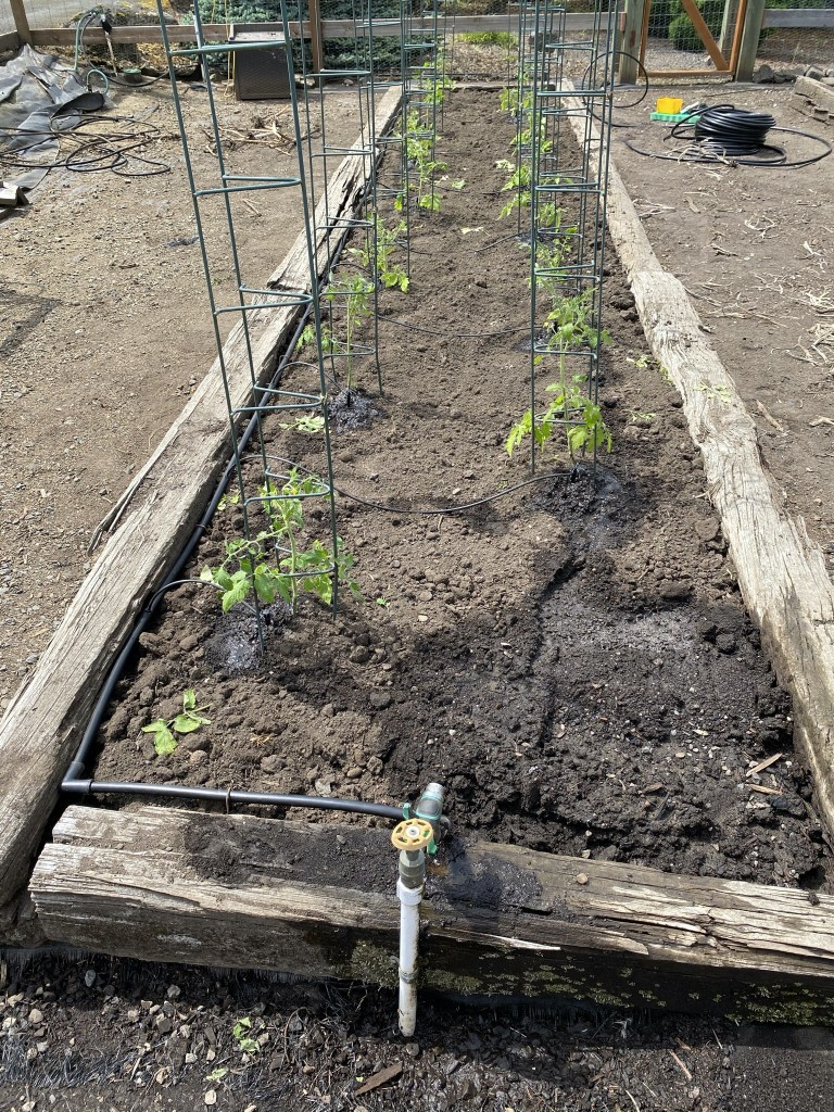 Veggie bed with irrigation