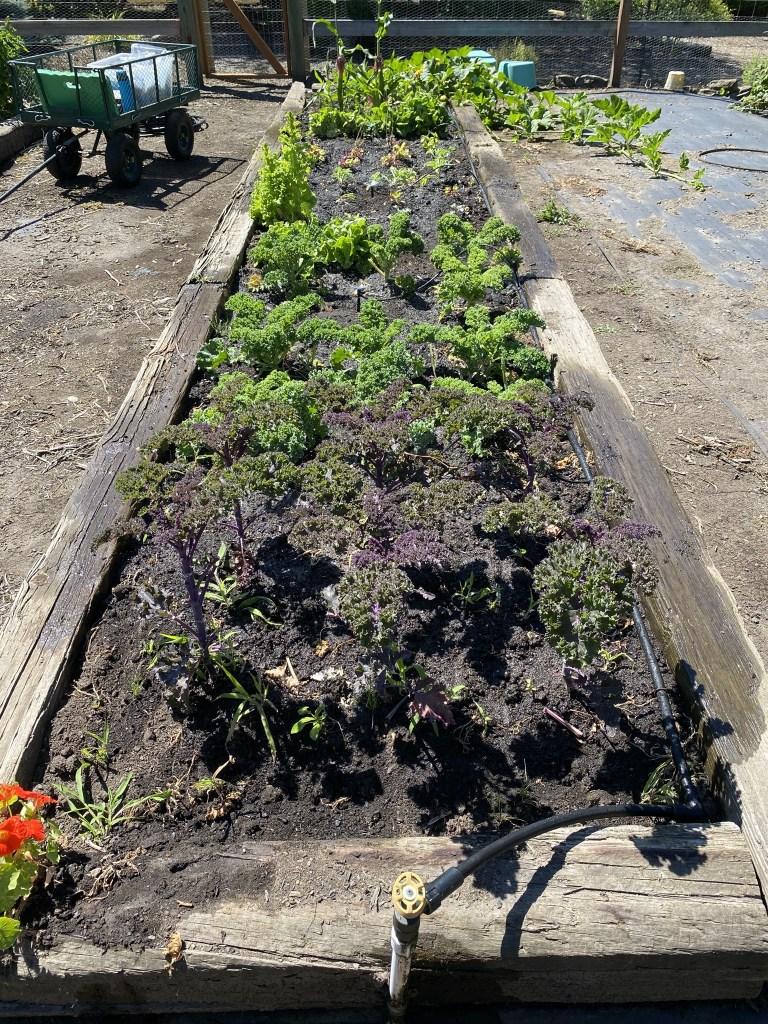 Veggie garden bed
