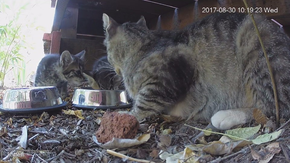 Feral kittens and cat