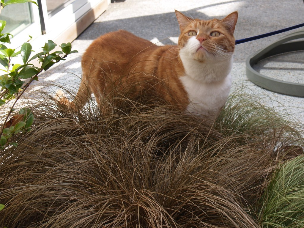 Pixel and grasses
