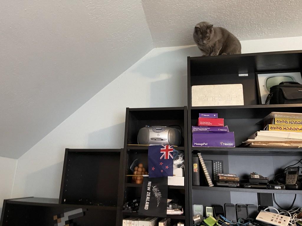 Paladin on my office shelves