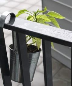 Plant aan het balkon voor in Kleine Huisjes
