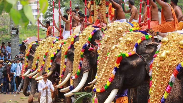 Elephants line with nettippattom (decorative golden headdress) at Thrissur Pooram