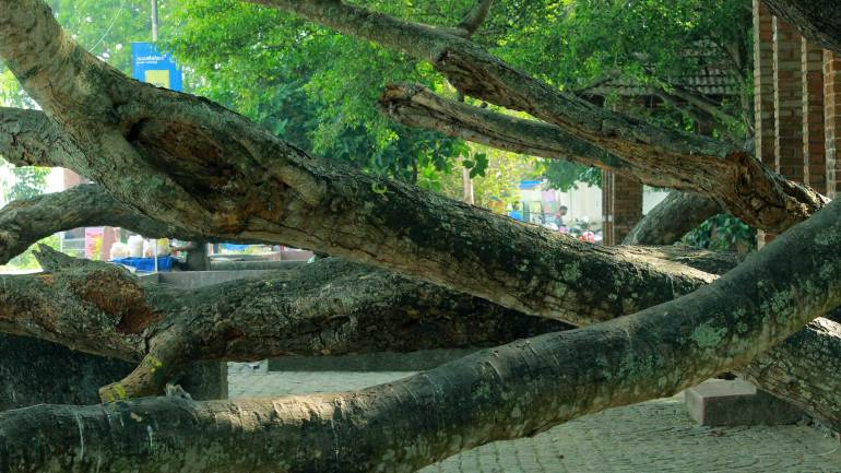 Fort Kochi Beach - Trees