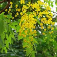 Flowers of Kerala