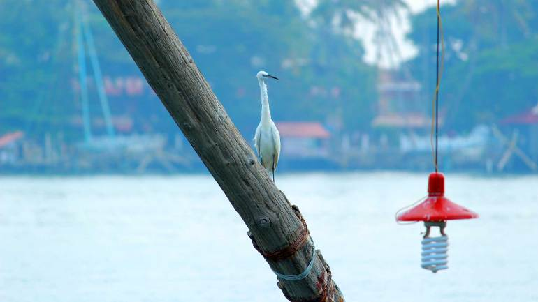 Stork on Chinese Fishing Net - Fort Kochi
