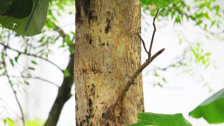 Teak-Wood-Matured-Kerala