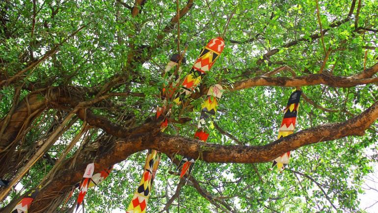 Banyan-tree-decorated-with-cloth-flags-on-the-premises-of-Kodungallur-Bhagavathy-Temple-Kerala-Festival-Photos-De-Kochi, Kodungallur Bharani