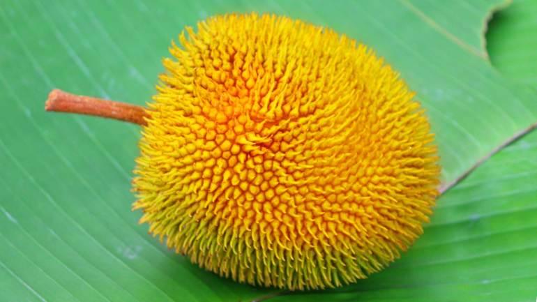 Ripe-Fruit-of-Artocarpus-Hirsutus-or-Anhili-(Anjili-Chakka-Anjili-Pazham)-De-Kochi-Kerala-Photos, Anjili Chakka, Anjili Pazham, Anjili Tree