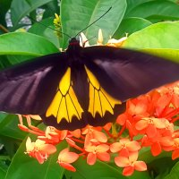 Butterflies of Kerala
