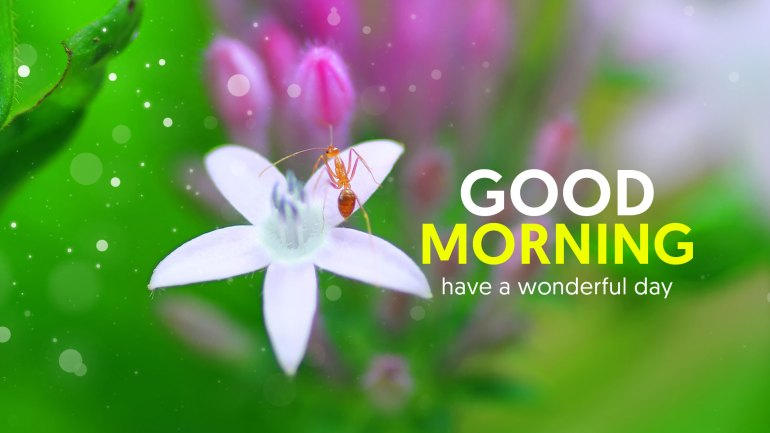 Good Morning Images, Good Morning Images HD, Good Morning msg, Good Morning HD, Good Morning Flowers, Beautiful Good Morning Images, Good Morning Pictures, Good Morning Wishes, Good Morning Greetings, Good Morning Wallpapers
