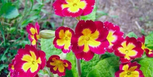 Цветы в саду которые любят тень: фото, видео